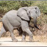 Elephant053