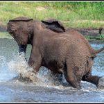 Elephant054