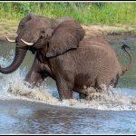 Elephant055