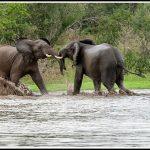 Elephant066