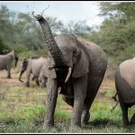 Elephant070