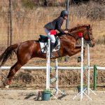 Zelda,-Fourways-Riding-Centre_SM11620