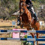 Zelda,-Fourways-Riding-Centre_SM11708